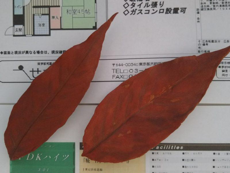 枯葉を作りましたよ。