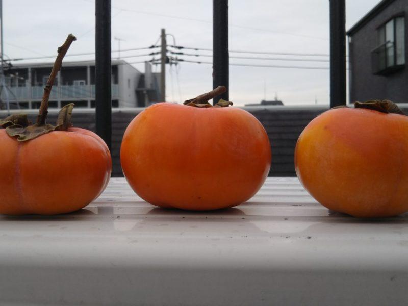 柿の季節でございます。