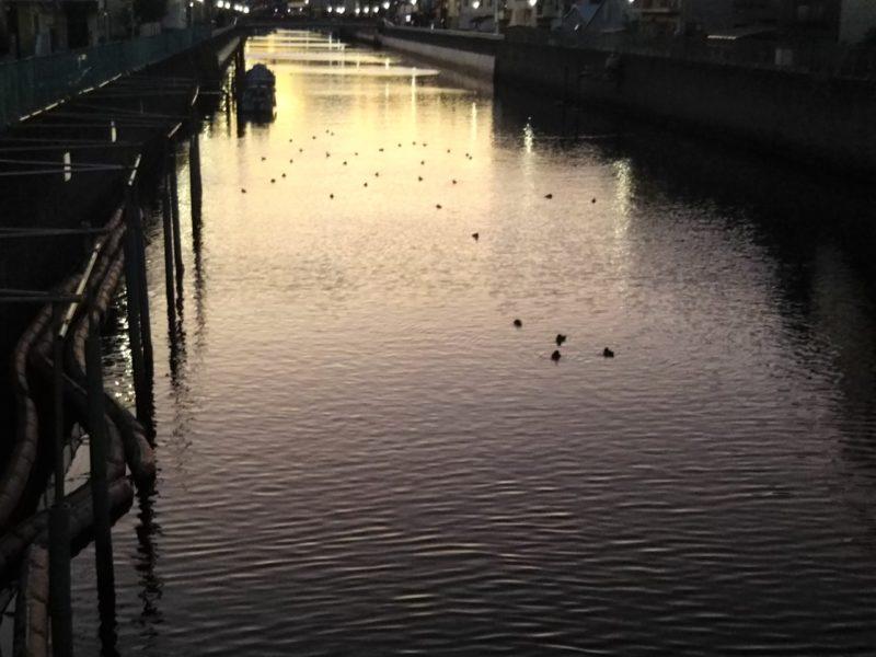呑川に架かる八幡橋から見た光景です。