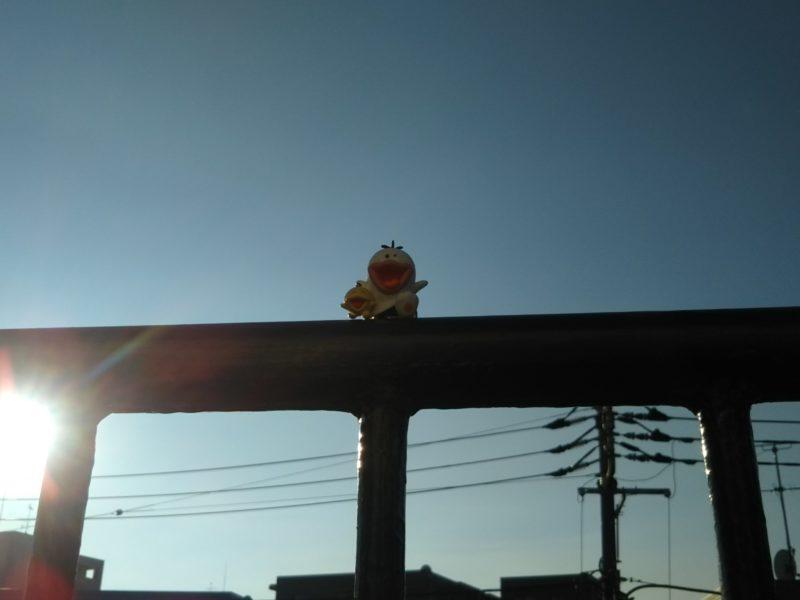オバQです。晴天が続いている東京です。