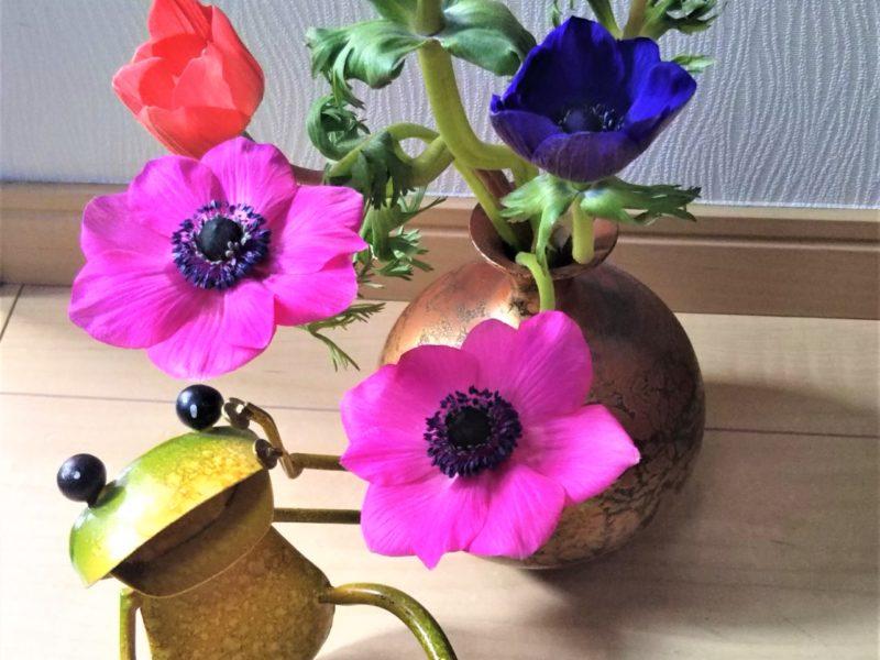 アネモネの花とカエルくんです。