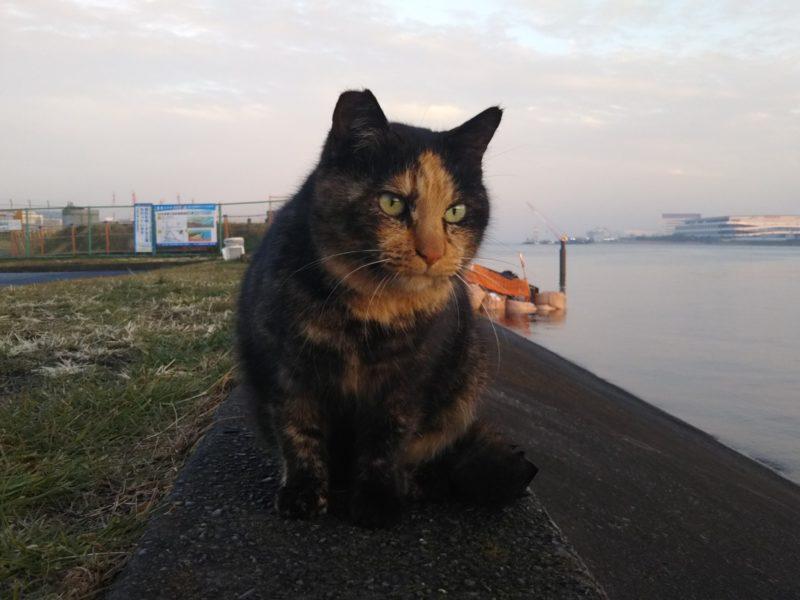 羽田空港で出会った猫さんです。