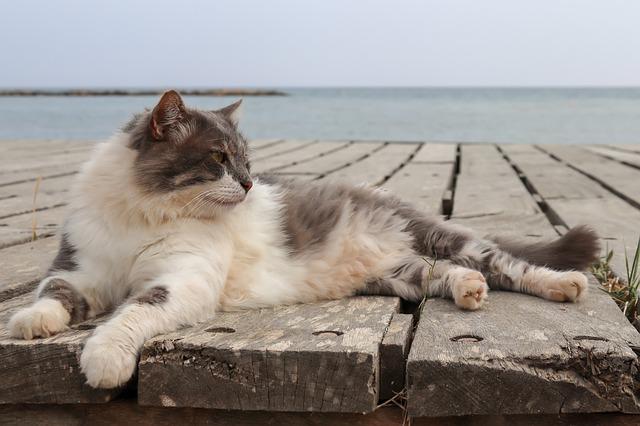 海辺でくつろぐ猫さんです。