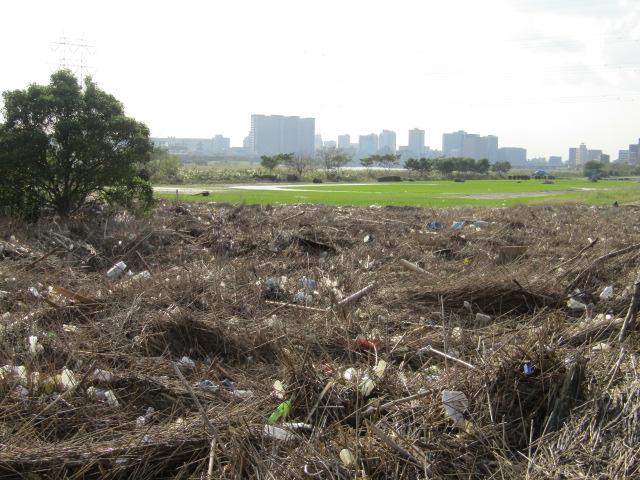 台風19号で運ばれてきたゴミです。