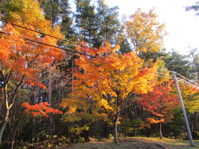 山梨県の道路のそばの紅葉です。
