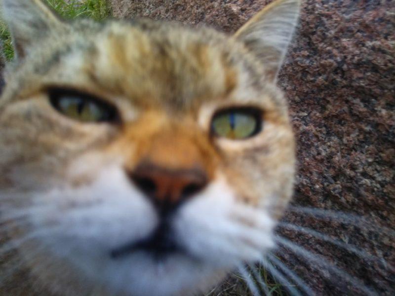 多摩川の本羽田近くの堤防にいた猫です。