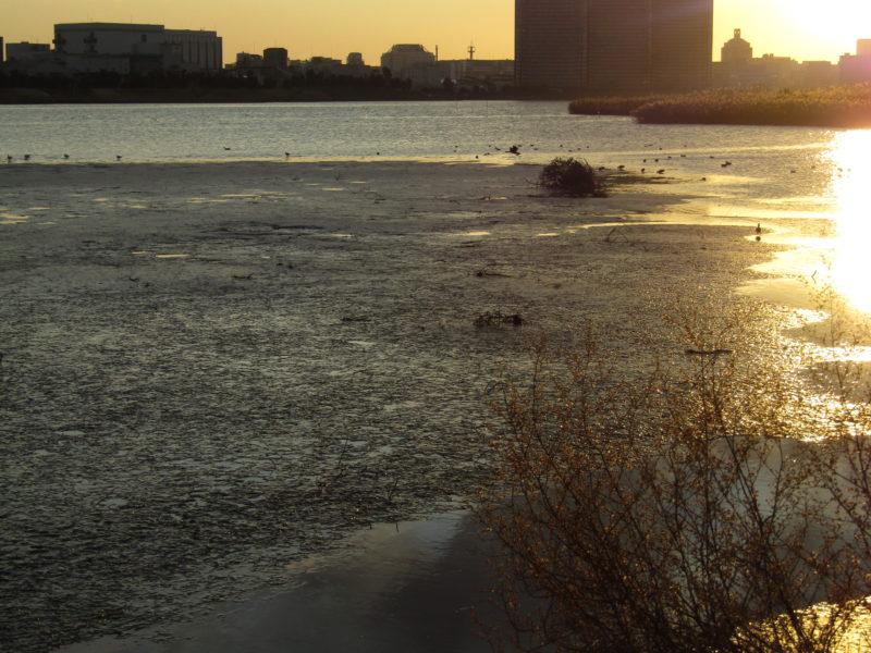 多摩川の干潟です。