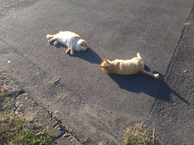 地面に転がる猫です。