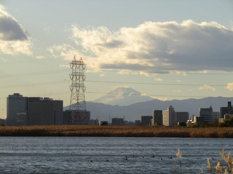 多摩川の向こうに見える富士山です。
