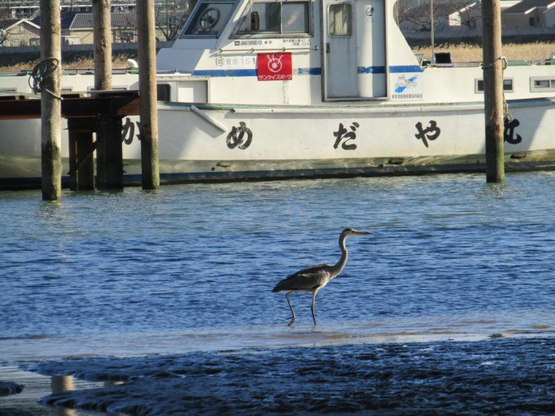 多摩川の河口付近で見た、鷺です。