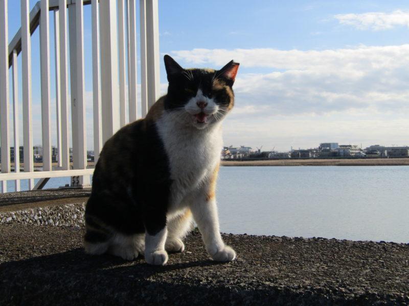 多摩川の河口近くの堤防にいた猫さんです。