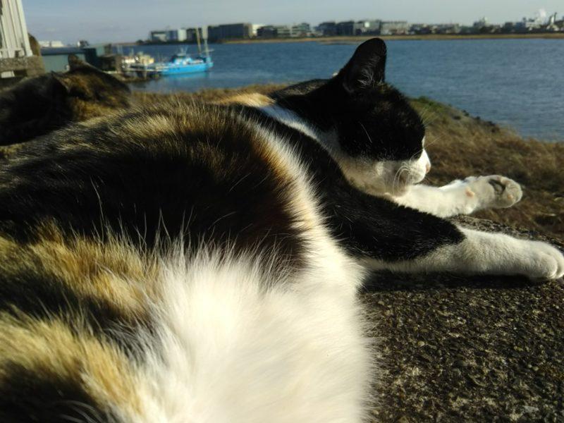 多摩川沿いで昼寝する猫です。