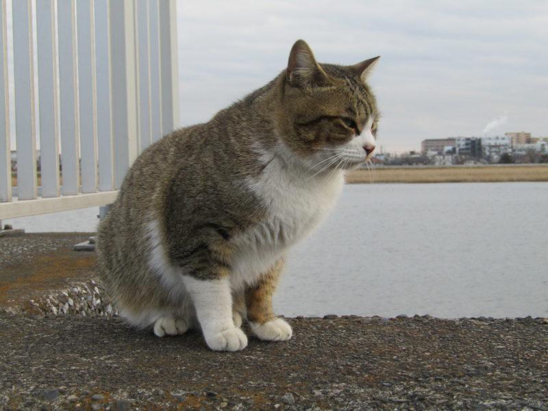 多摩川河口付近にいた猫です。