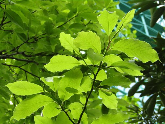 萩中公園の木です。