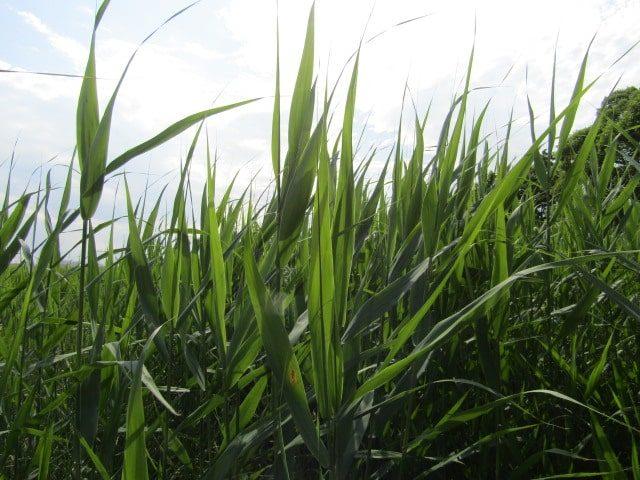 多摩川河川敷の草原です。