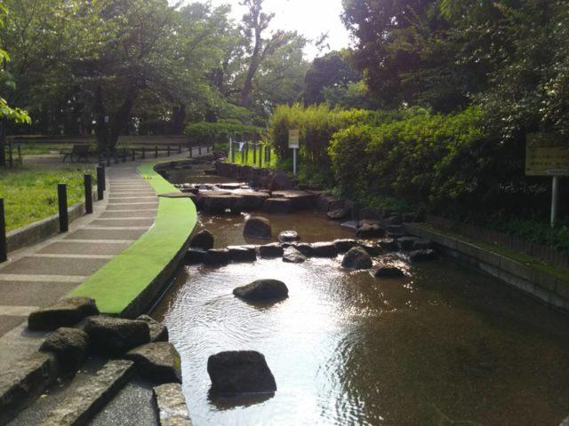 大田区萩中公園の水遊びできる人工の流れです。