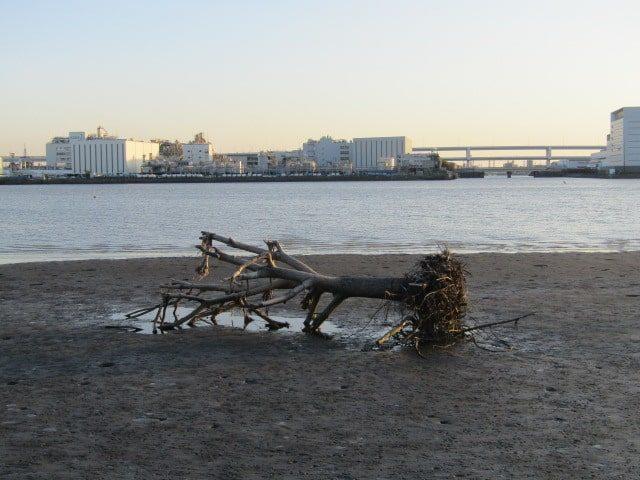 多摩川河口、羽田の海です。