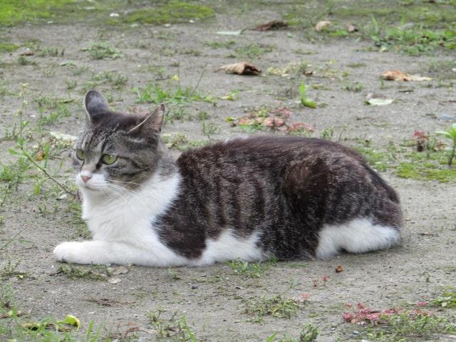 北野神社の猫です。