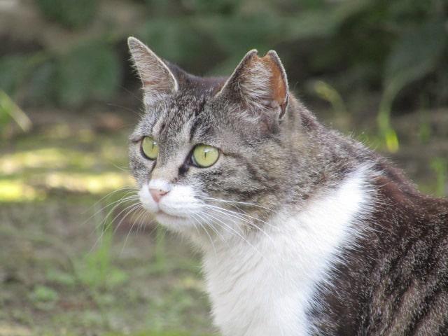 北野神社の境内にいた猫です。