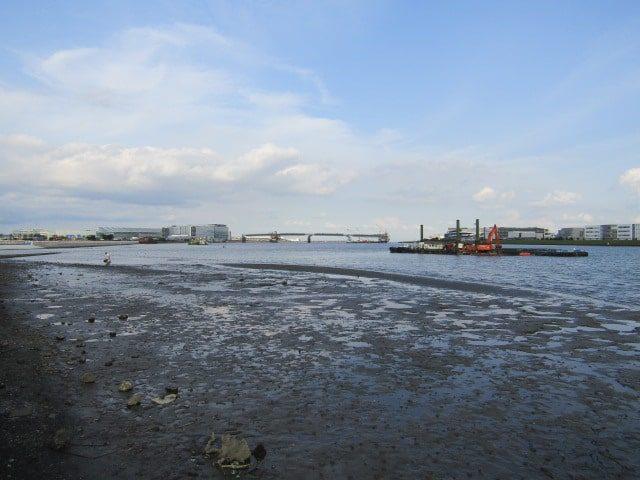 多摩川河口付近の干潮時の様子です。