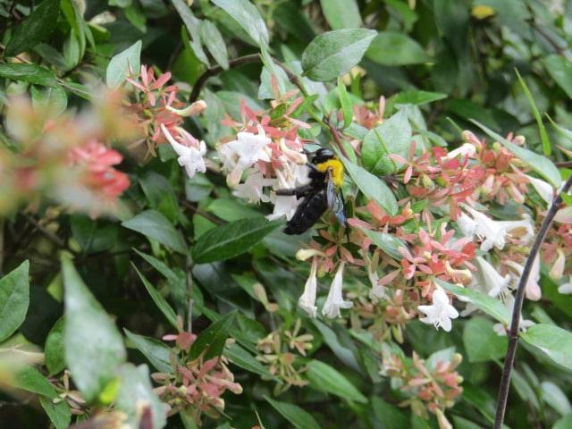 花の蜜を吸う蜂です。