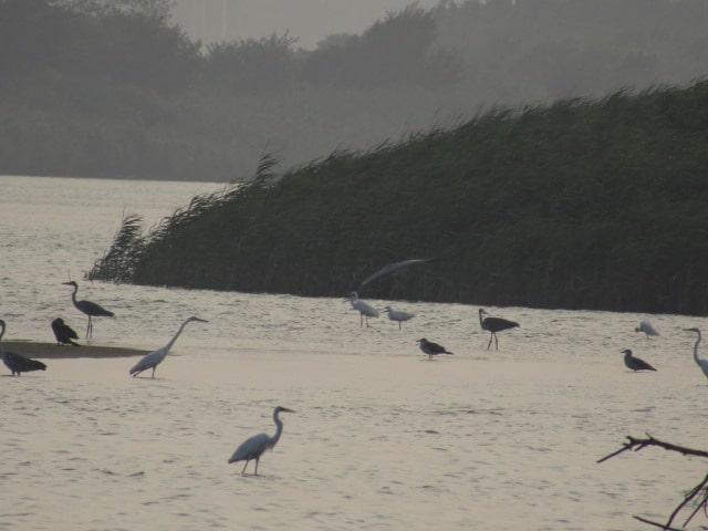 多摩川河口付近に集まる鳥たちです。