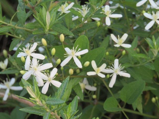 多摩川河川敷の花です。