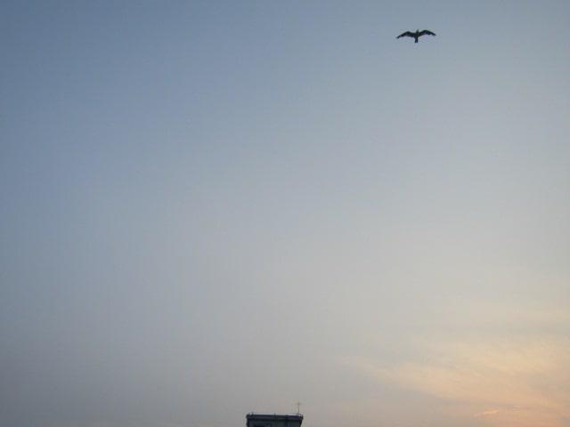 多摩川の水門の上を飛ぶカモメです。