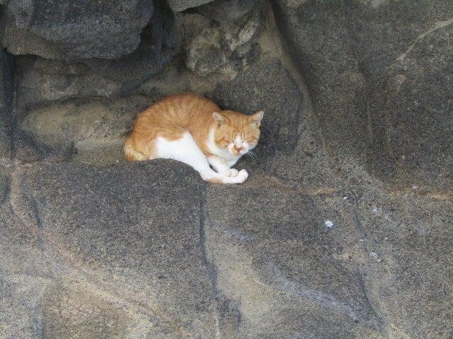 岩場で眠る猫です。