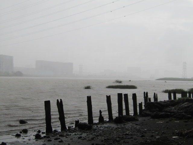 雨の多摩川です。