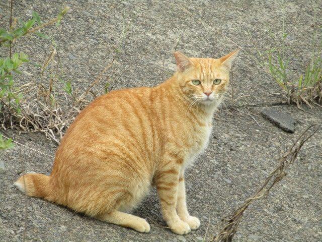 多摩川の土手にいた猫です。