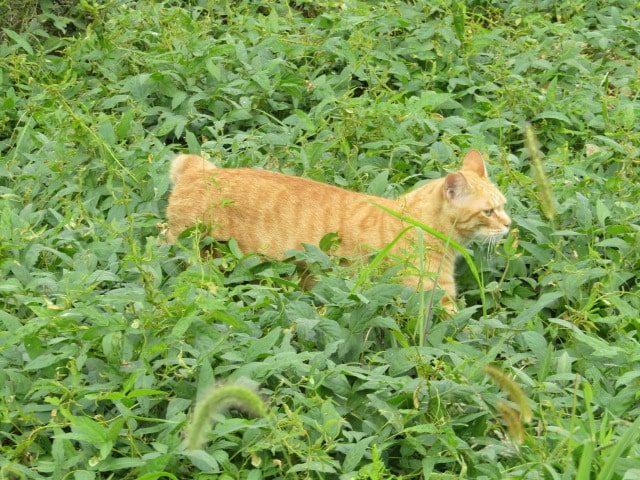 多摩川の土手にいた猫さんです。