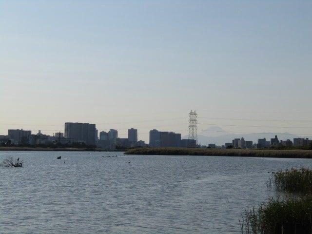 多摩川の河口近くから見える富士山です。