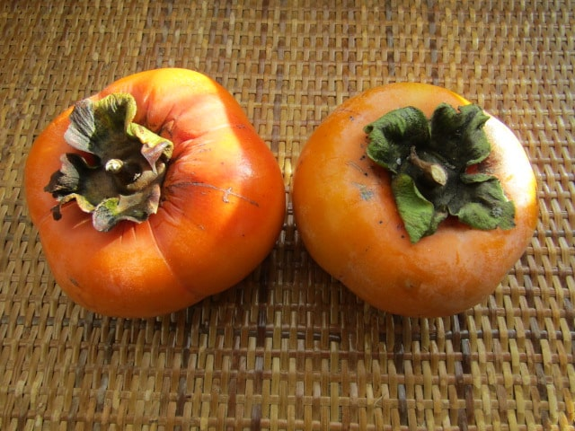 秋の味覚柿です。