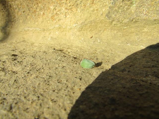 お寺の石段にいた小さな虫です。