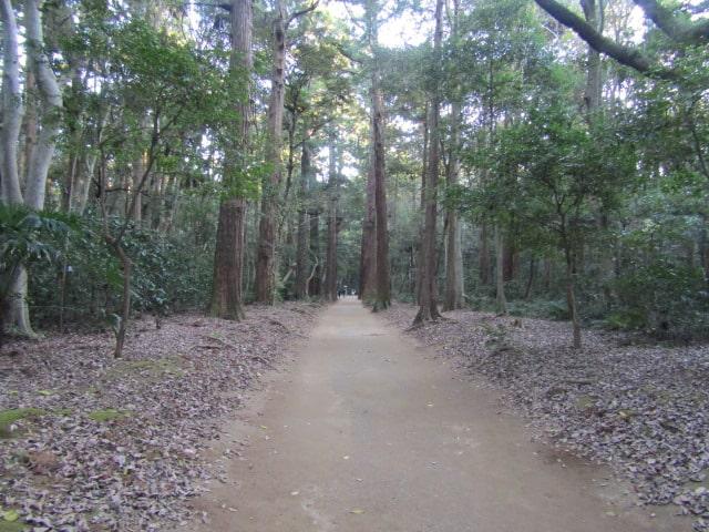 神社の境内の林道です。
