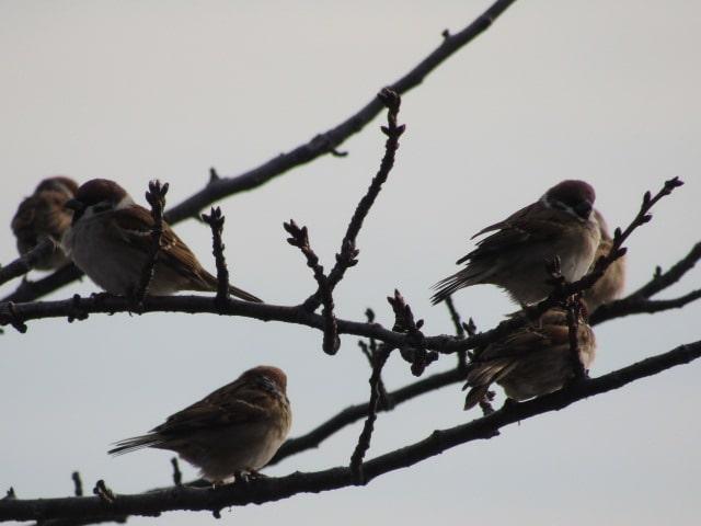 多摩川の河川敷の雀です。