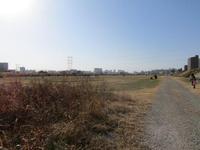 晴れた日の多摩川河川敷です。