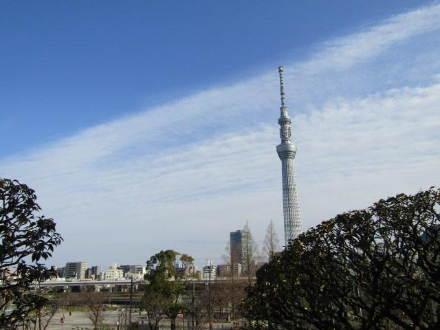 隅田川越しに見えるスカイツリーです。