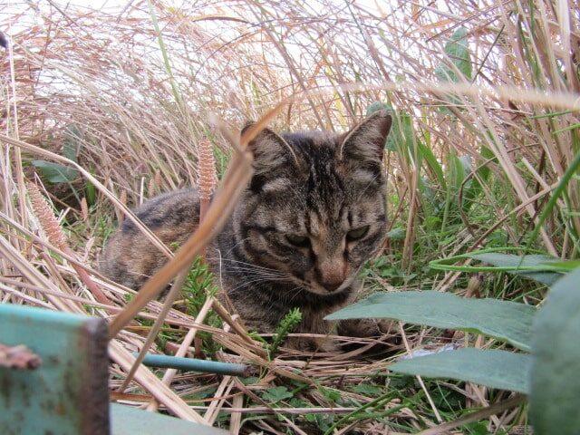 多摩川河口付近で暮らす猫です。