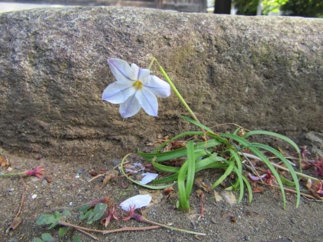 お寺の庭に咲いていた花です。