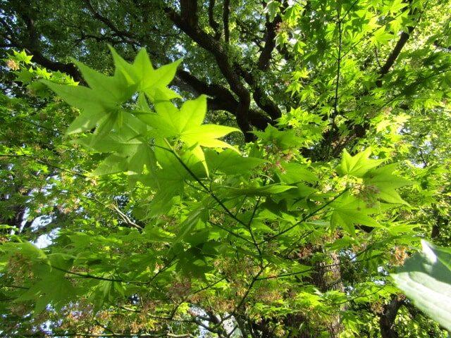 大福生寺の境内の紅葉です。