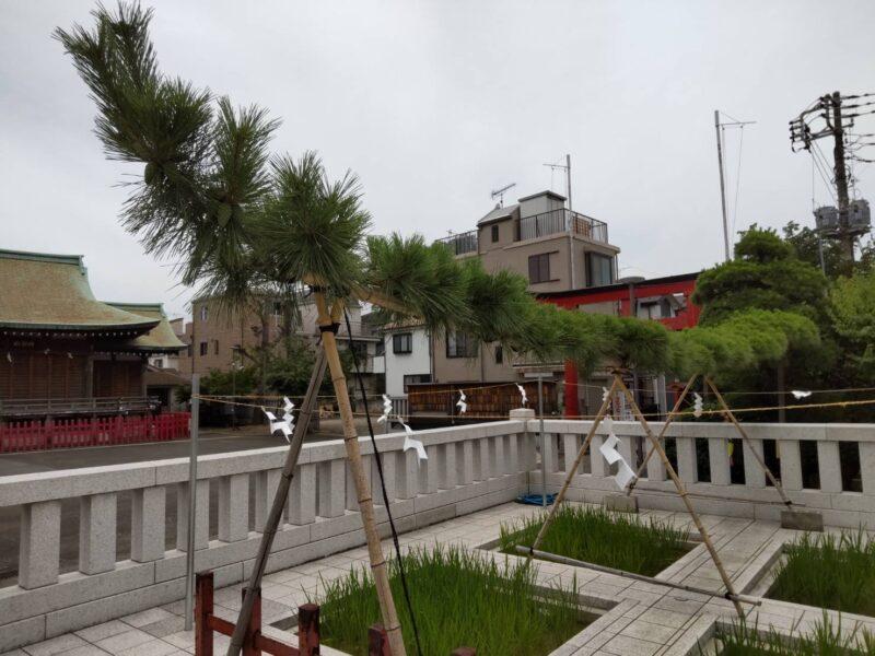 穴守稲荷神社の稲田です。