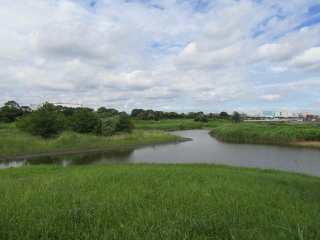 東京港野鳥公園内の淡水池です。