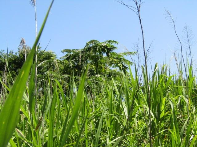 多摩川河川敷の草です。
