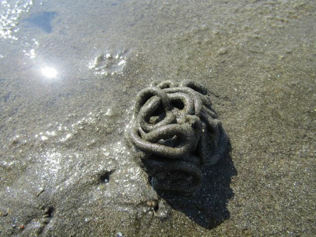 海岸にあったゴカイの糞塊です。