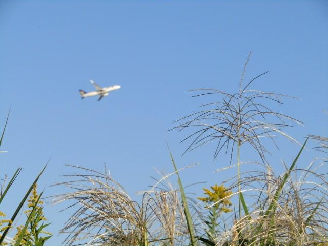 多摩川河川敷と飛行機です。 .